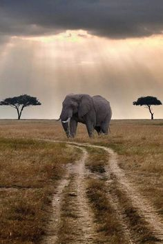 Follow your own path, elephant, dirt road, savanna, clouds, sun beams, stunning, photo, panorama, breathtaking.