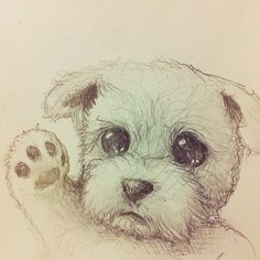 30 best drawing images on pinterest cute drawings draw animals
