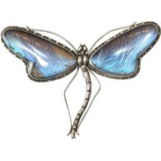Here we have a rather substantial and rather fantastic sterling silver and butterfly wing dragonfly brooch. When I bought him I thought he looked a  $690