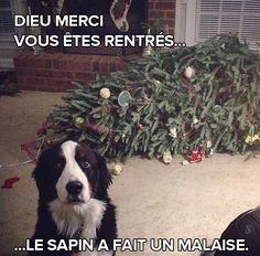 Dog Shaming Christmas Tree Fainted - Friday Frivolity - Holiday Cheer, One Way or Another - Christmas Memes + LINKY for all things Fun, Funny, Happy & Hopeful! Funny Animal Pictures, Funny Animals, Cute Animals, Animal Pics, Funny Animal Humor, Puppy Pictures, Dog Quotes, Animal Quotes, Drake Quotes