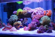 Reef tank with height and void