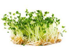 Semi germogliati: un super alimento! - Nutrizione Naturale