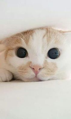 Cats are one of the few animals that can look possessed and adorable at the same time. :p