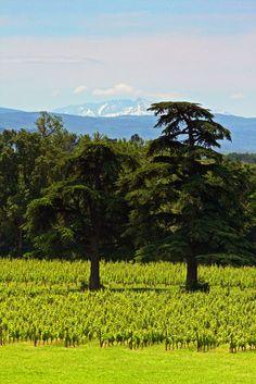 Wine. Languedoc.