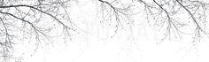 Black Beech - Fototapeten & Tapeten - Photowall