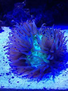 1000 images about transforming aquariums into art on for Aquarium elegance