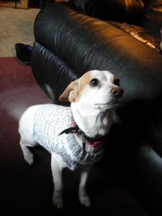 Put your new crocheted dog sweater on your dog the next time you take him for a walk. It will keep him nice and warm during the chilly months. Use any color yarn to match your dog's personality.