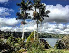 Lake Barrine, North Queensland, Australia. Photo: HoppyKanga