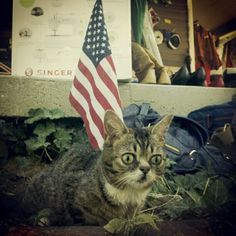 BUB the PATRIOT...how could you not love this little guy?