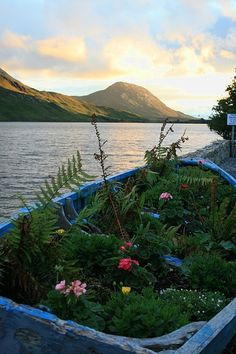 The boat garden, Connemara, Ireland
