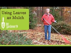 """""""How to Use Leaves as Garden Mulch"""" video by Joe Lamp'l - the Joe at Joe Gardener. Garden Mulch, Garden Trees, Trees To Plant, Gardening, Wood Chip Mulch, Types Of Mulch, Rubber Mulch"""