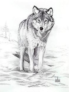 Wolf by on DeviantArt Animal Sketches, Animal Drawings, Pencil Drawings, Art Drawings, Wolf Photos, Wolf Pictures, Anime Wolf Zeichnung, Anime Wolf Drawing, Wolf Sketch