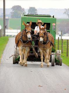 ≈ ≈ Amish Wagon ≈ Sarah's Country Kitchen ≈ ≈