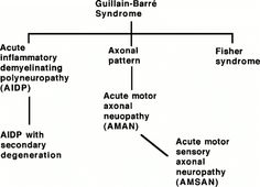 guillain barre syndrome pictures - Google Search Guillain Barre Syndrome, Cidp, Peripheral Nervous System, Medical News, Nursing Students, Autoimmune, Biology, Disorders, Medicine