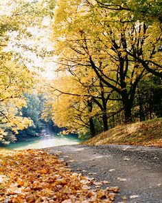 take a stroll on a crisp autumn afternoon