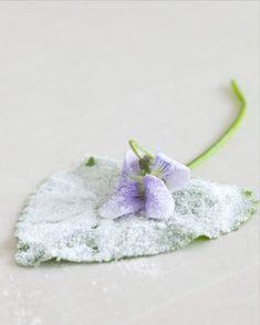 candied wild violets (recipe)