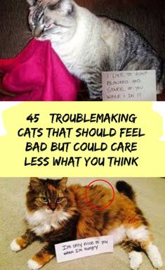 Troublemaking Cats That Should Feel Bad But Could Care Less What You Think Stupid Funny Memes, Funny Relatable Memes, Funny Fails, Funny Posts, Funny Humor, Hilarious, Best Butt Lifting Exercises, Really Funny Pictures, Top Funny