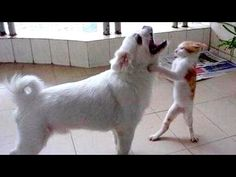 You will have TEARS IN YOUR EYES FROM LAUGHING - The FUNNIEST ANIMAL compilation - YouTube