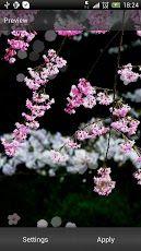 Kirsikankukka Live-Taustakuva