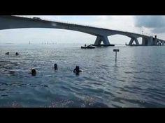 Scuba diving at the #Zeelandbrug, the Netherlands. #JackieO