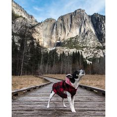 """Yosemite National Park in California, USA  Let your dog release his inner """"Call of The Wild"""" as you two explore one of America's most amazing national parks."""