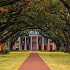 Do you know this icon of the South? This is a must see for any visitor to or . The landscape is breathtaking and the history is as fascinating as it is eye-opening. Louisiana Bayou, Tree Tunnel, Facebook Photos, Did You Know, New Orleans, Things To Do, Trees, Social Media, Eye