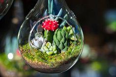 succulents in glass Succulents In Glass, Succulents Diy, Diy Garden Projects, Cactus Y Suculentas, Bulb Flowers, Succulent Terrarium, Floating Candles, Jar Gifts, Cactus Flower