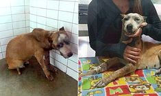 Mexico:Thugs taped pregnant dog's mouth shut around a FIREWORK! She may survive. Is badly injured. Please donate if you can.