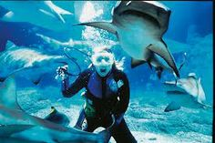 great barrier reef    ***uh huh***