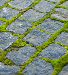 10 Cheap but creative ideas for your garden 1 Moss growing between cobblestones. How to grow moss The post 10 Cheap but creative ideas for your garden 1 appeared first on Garden Ideas. Adoquines Ideas, Path Ideas, Paving Ideas, Moss Garden, Garden Paths, Garden Landscaping, Garden Paving, Patio Pavé, Backyard Pavers