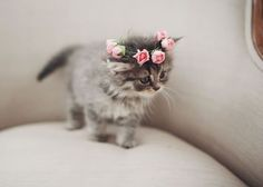 10 Cute Pictures In Case You Are Sad Today. Cute kitty flower crown