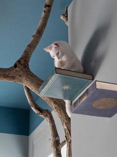 Romeow Cat Bistrot: Tommaso Guerra - Restaurant & Bar Design