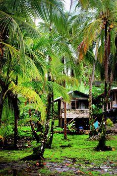 BOSQUE TROPICAL EN LA ISLA BASTIMENTOS, BOCAS DEL TORO, PANAMÁ