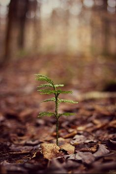 Tiny tree starting to grow in the forest.it's spring and a time for new life Mother Earth, Mother Nature, Forest Photography, Walk In The Woods, Belleza Natural, Belle Photo, Beautiful World, Woodland, Scenery