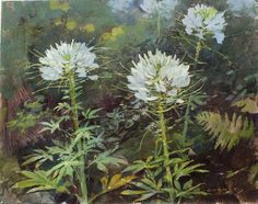 James Gurney, Cleome, casein on canvas mounted to panel, 11 x 14