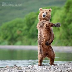 "11 Stunning Nature Images (including ""the dancing bear"")"