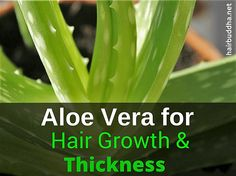 Aloe vera is an excellent remedy for hair loss. Here's how to use aloe vera on your hair #AloeForHair