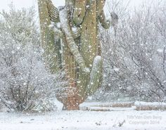 Sometimes it actually snows in Arizona Snow In Arizona, State Of Arizona, Tucson Arizona, Lowell Observatory, Colorado River, Natural Wonders, Night Skies, Travel Usa, Grand Canyon