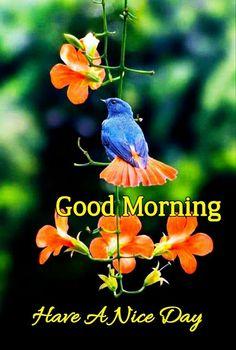 Good Morning Images For Whatsapp Good Morning Sunday Pictures, Good Morning Smiley, Good Morning Friends Images, Good Morning Beautiful Pictures, Good Morning Images Flowers, Good Morning Beautiful Images, Good Morning Tuesday, Good Morning Snoopy, Good Morning Gif