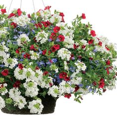 The Bunker Hill flower combination displays our American pride very beautifully!