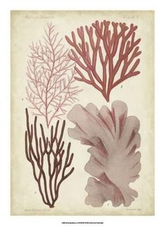 Giclee Print: Seaweed Specimen in Coral III by Vision Studio : 22x16in