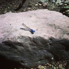 Dragonfly is such a pretty blue.