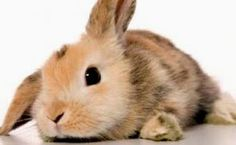 animali da compagnia - Cerca con Google