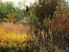 Piet Oudolf, Fall color