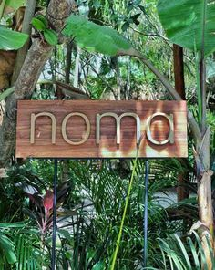 We were there! Noma Pop Up Mexico - The Better Palces