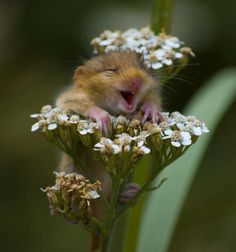 happy as a mouse