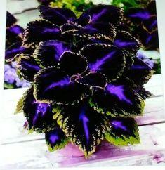 Diy Garden, Shade Garden, Garden Plants, House Plants, Garden Rake, Garden Trellis, Garden Seeds, Indoor Garden, Garden Tools
