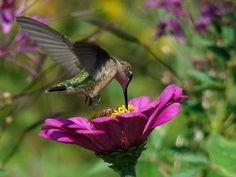 Hummingbirds    #hummingbird                              …                                                                                                                                                                                 Mais