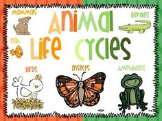 """This unit is designed to teach children about the life cycles and classification of different animals: mammals, insects, reptiles, amphibians, birds, and fish. It also includes lesson plans aligned with kindergarten common core standards. A good book to use with this unit is """"Scholastic Discover: See Me Grow""""."""