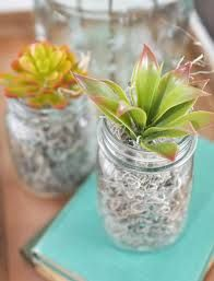 Image result for succulent plants as centerpieces